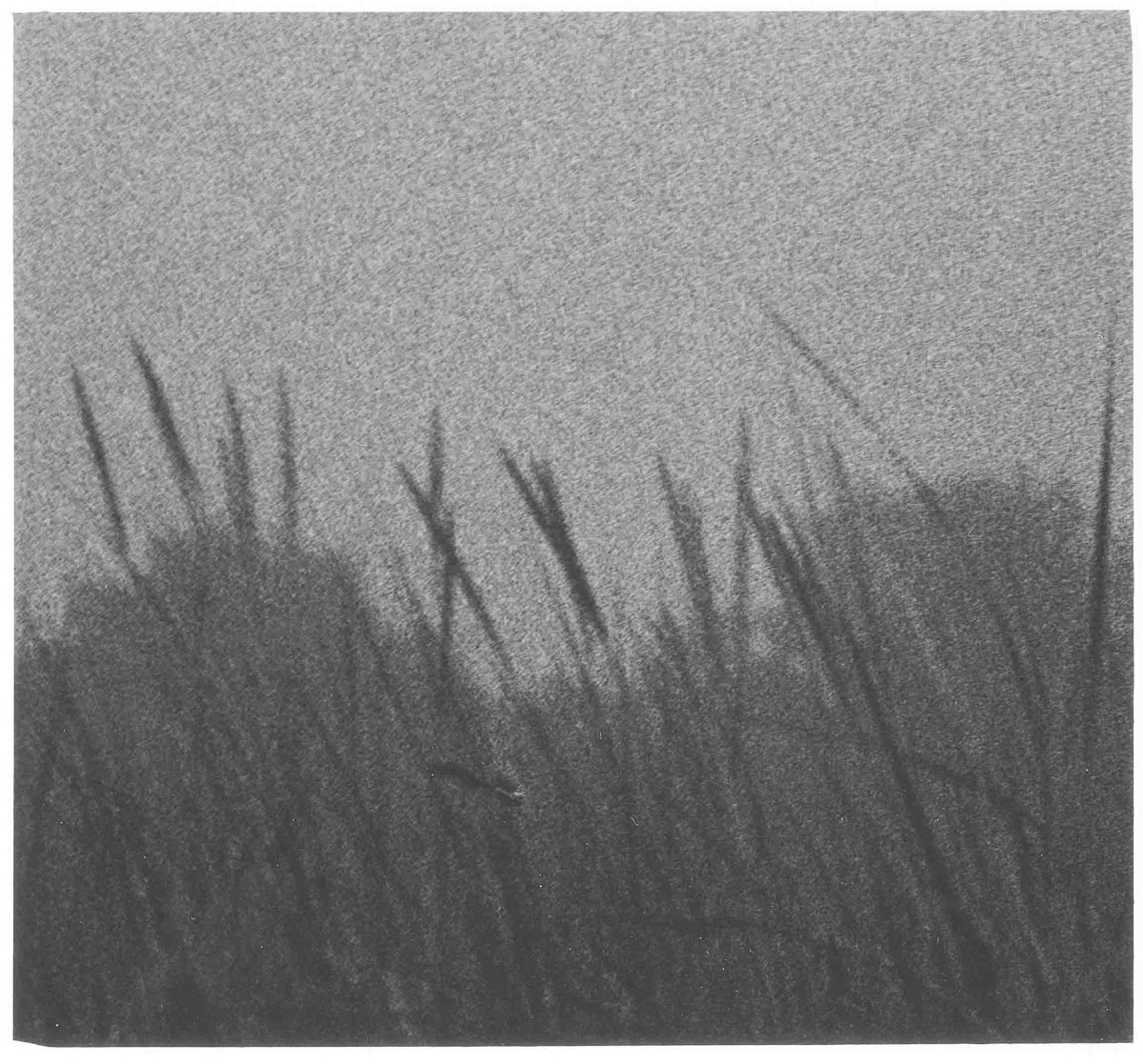 2. Ilford-HP5-Plus-in-SPUR-HRX-3-New